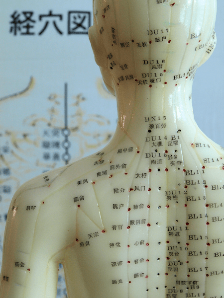 Acupuncture Meridian Chart and Model